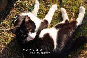 2猫11.02.26