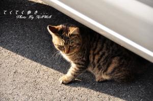 3猫11.02.26