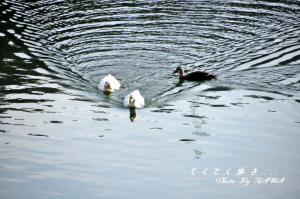 6大谷池11.02.26