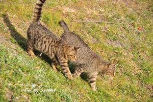 7猫11.02.26