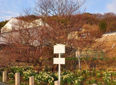 1十六日桜11.03.07