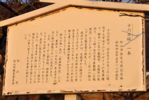 2十六日桜11.03.07