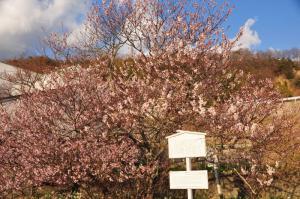 1十六日桜11.03.16