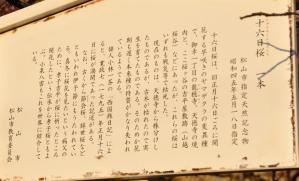 2十六日桜11.03.16