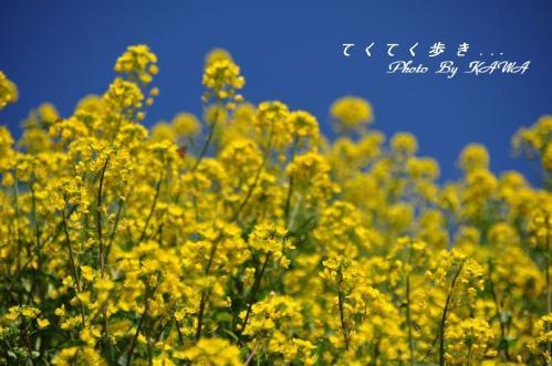 6旅行村11.03.13
