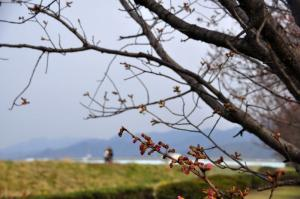 16赤坂泉11.03.19