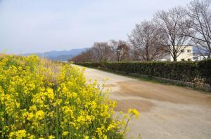 17赤坂泉11.03.19