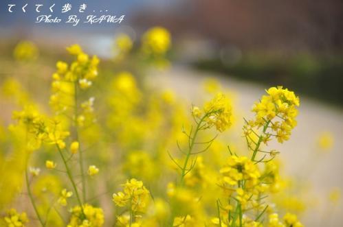 18赤坂泉11.03.19