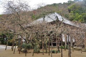 5うば桜11.03.21