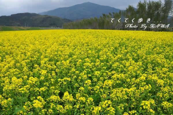 2五郎河川敷11.03.20