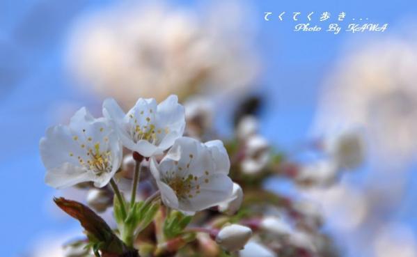 6大宝寺11.03.26