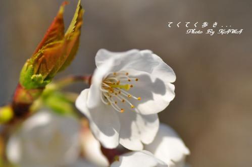 8大宝寺11.03.26