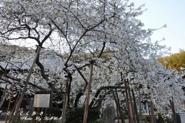 2大宝寺11.03.28