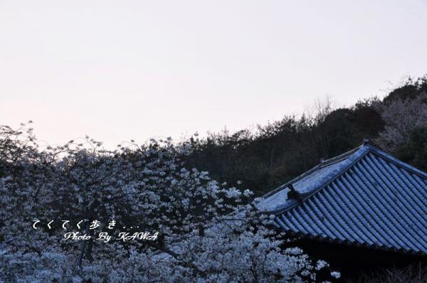 6大宝寺11.03.28