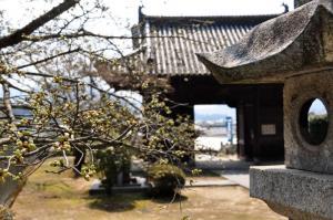 4しぐれ桜11.03.30