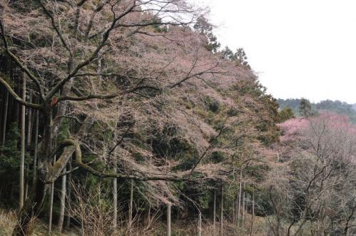 5源太桜11.04.03
