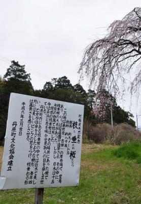 7古田11.04.03