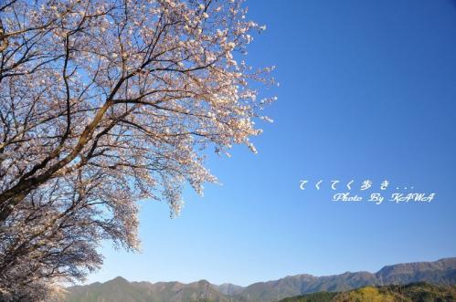 1緑化11.04.04