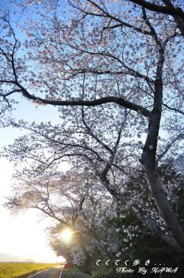 4緑化11.04.04