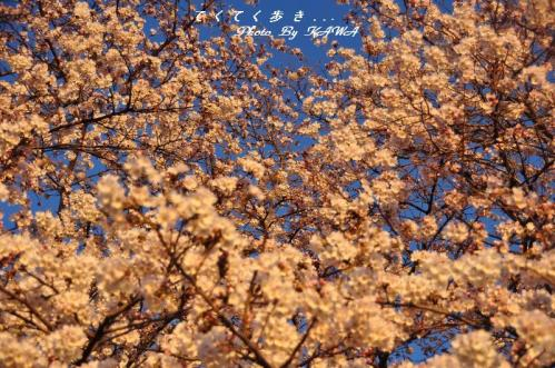 7緑化11.04.04