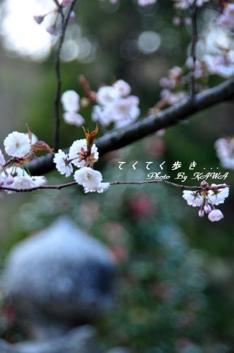6薄墨11.04.12