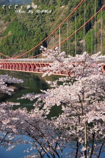 9大渡ダム大橋11.04.09 2