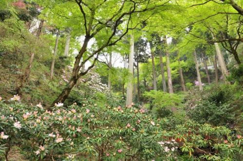 1丸山公園11.04.16