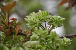 5緑化11.04.17