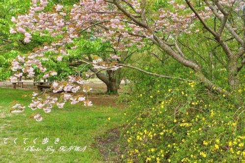 8緑化11.04.23