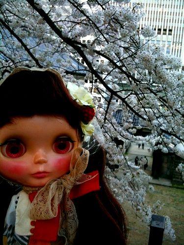 IMG_8930sakura.jpg