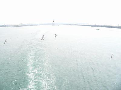 写真キャプション=直江津港から離れて佐渡へ向かう「こがね丸」の船上から