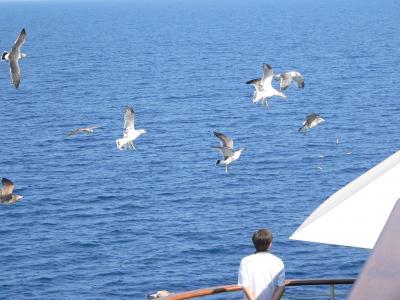 写真キャプション=乗船客が投げる「かっぱえびせん」を上手に受け取るカモメ