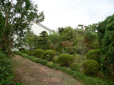 写真キャプション=父が植えた植木群。今では皆が大きくなり、ジャングル状態になっている