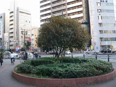 写真キャプション=大阪難波の元町2丁目の交差点で香る「「金木犀」(キンモクセイ)