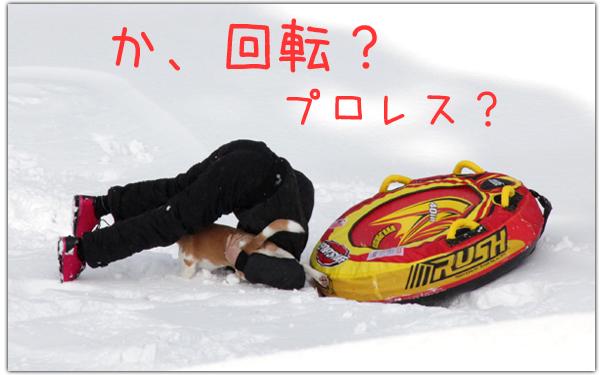 0221レモンビーグルモク5