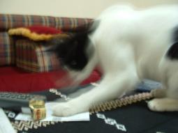 saki play