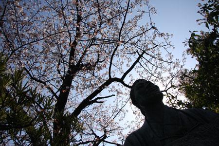近藤勇と桜