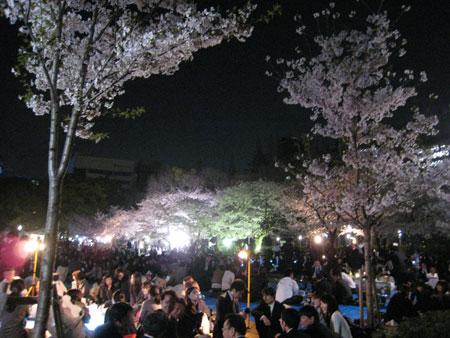 ウツボ公園の桜