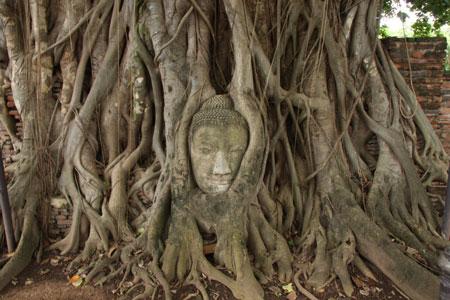 木の根に取り込まれた仏頭