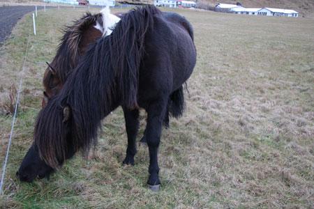 背毛が長い馬