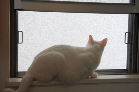 窓に座る雷さん