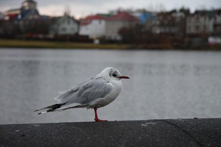 たそがれる白い鳥