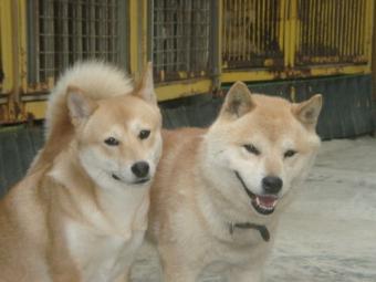 翔太と雪奈