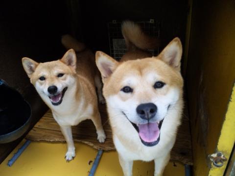 翔太郎と千尋