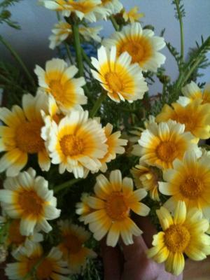 flower).jpg