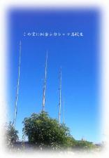 kotoshi_dake.jpg