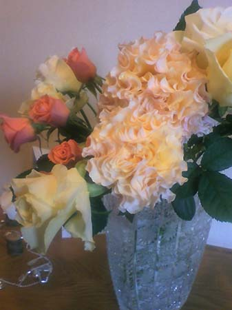 rose_20091225122833.jpg