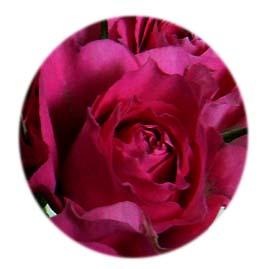 rose_enji.jpg
