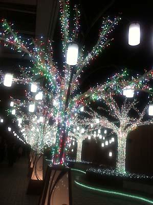tree_m.jpg