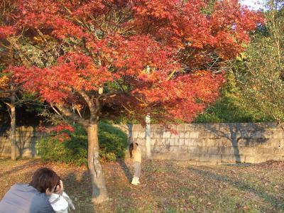yunパパ公園2009.11②